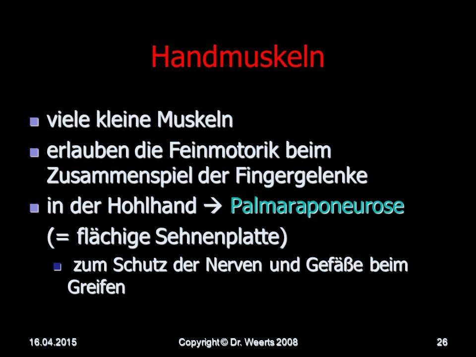 Handmuskeln viele kleine Muskeln