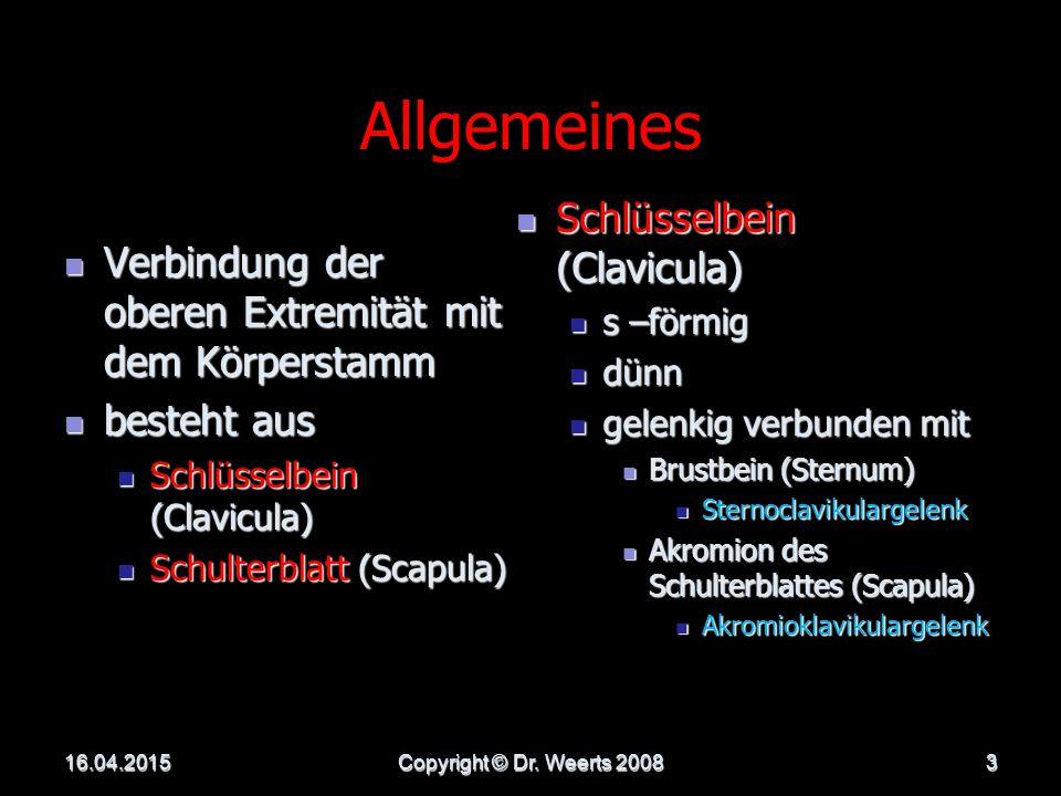 Allgemeines Schlüsselbein (Clavicula)