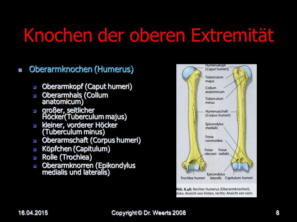 Knochen der oberen Extremität