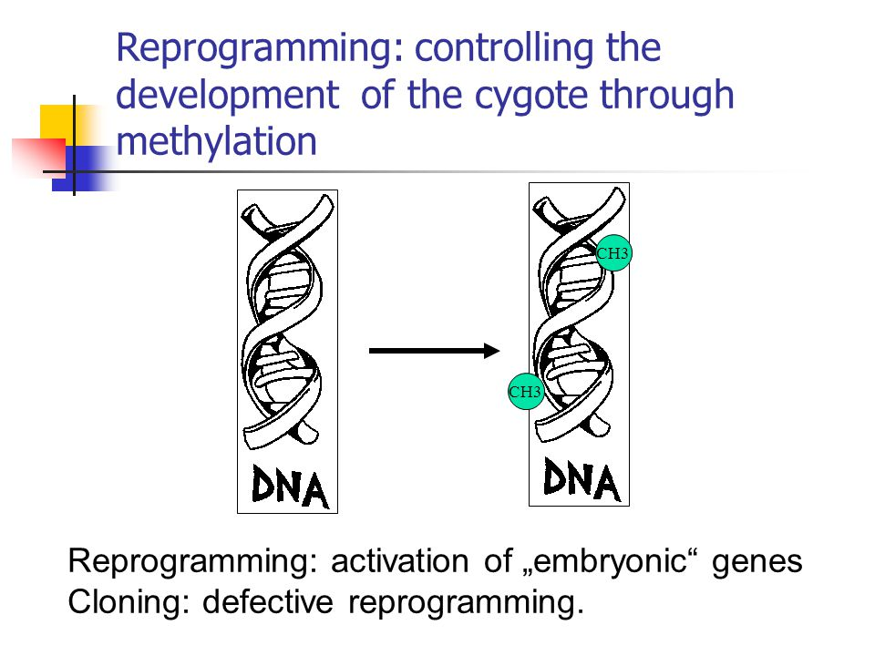 Reprogramming: controlling the development of the cygote through methylation