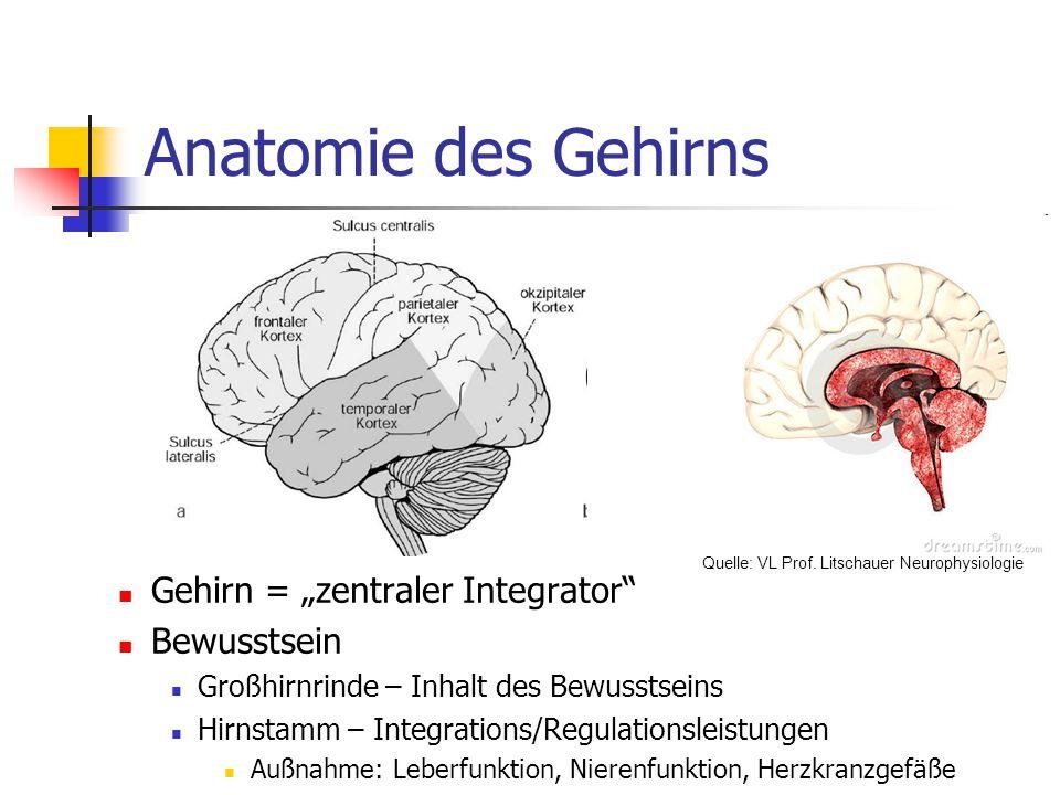 "Anatomie des Gehirns Gehirn = ""zentraler Integrator Bewusstsein"