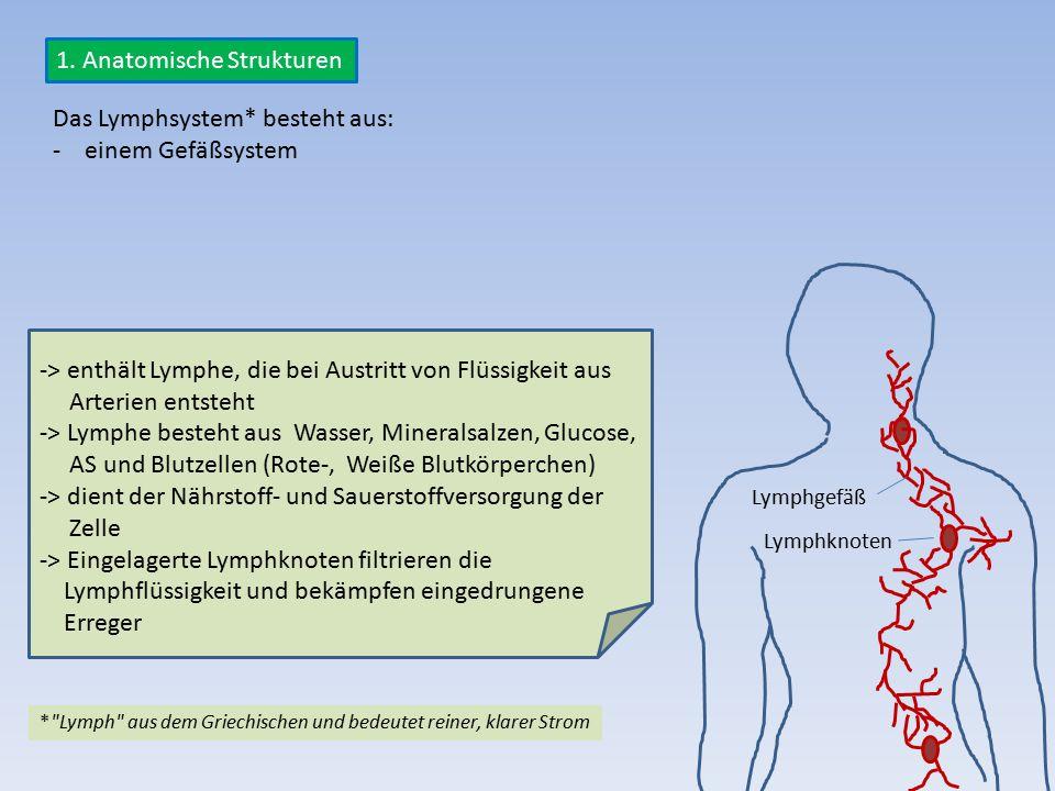 1. Anatomische Strukturen