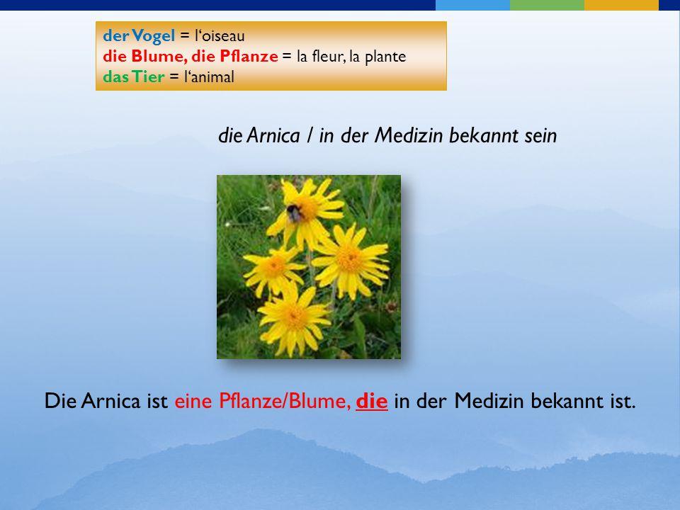 die Arnica / in der Medizin bekannt sein