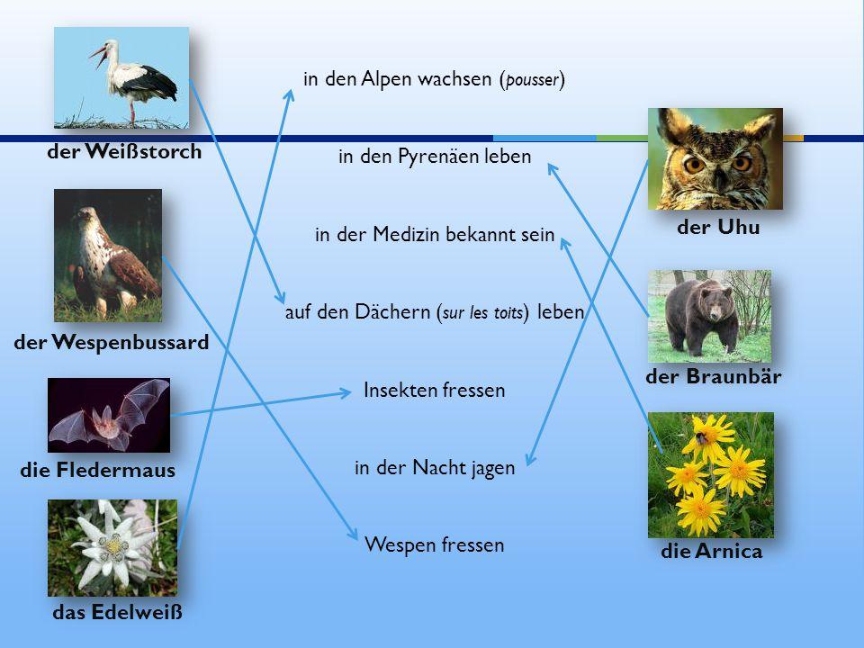 in den Alpen wachsen (pousser)