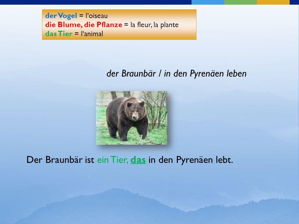 der Braunbär / in den Pyrenäen leben