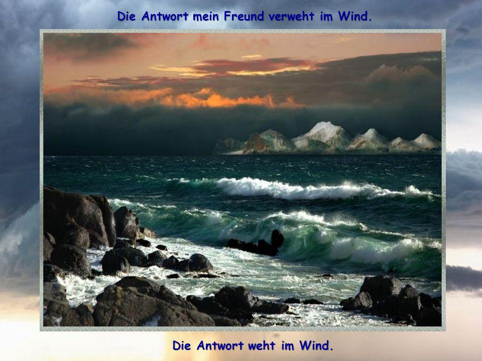 Die Antwort mein Freund verweht im Wind. Die Antwort weht im Wind.