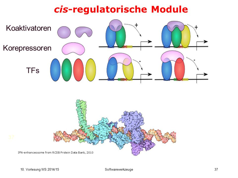 cis-regulatorische Module