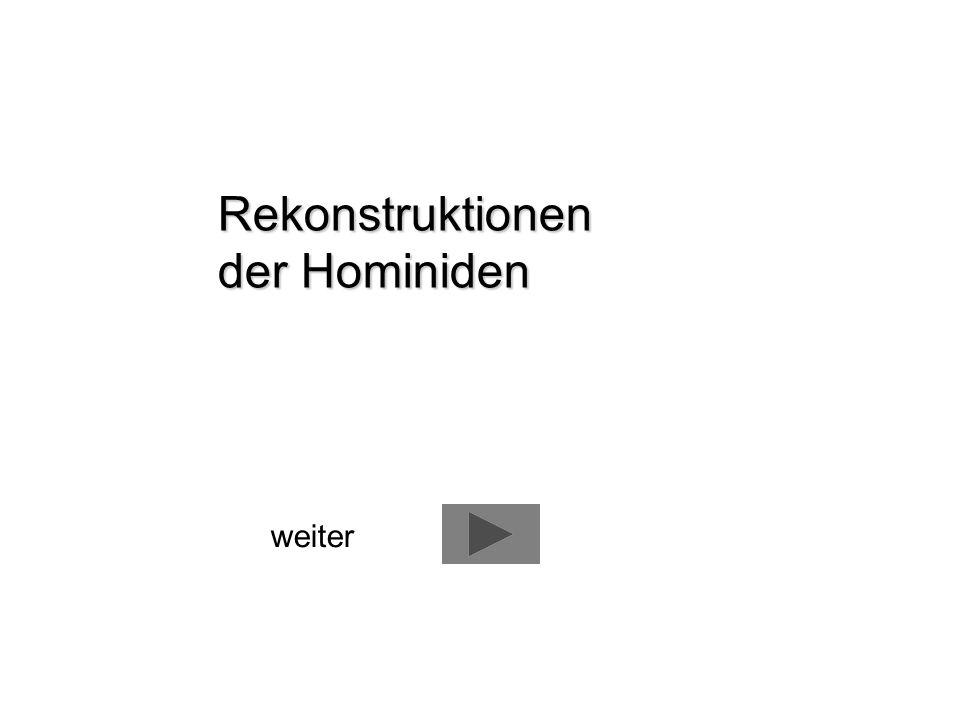 Rekonstruktionen der Hominiden