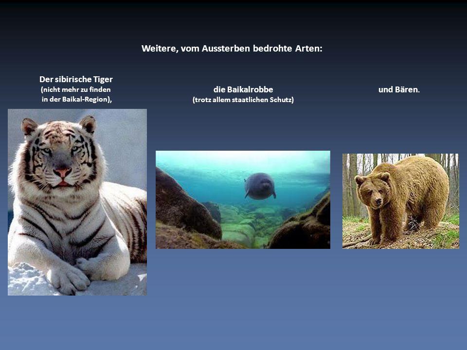 Weitere, vom Aussterben bedrohte Arten: