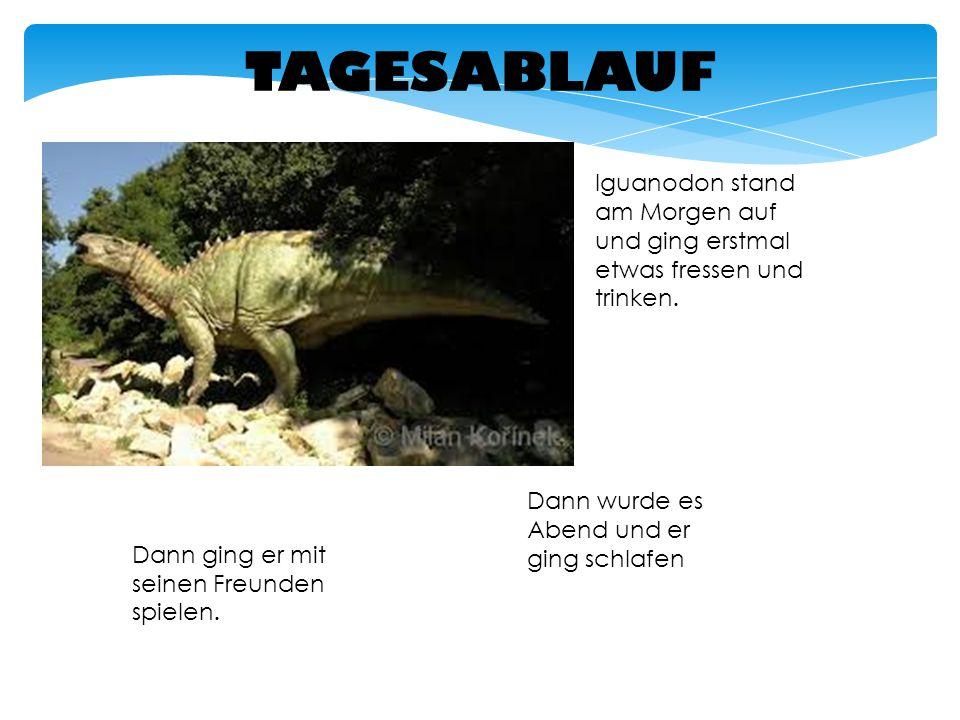 TAGESABLAUF Iguanodon stand am Morgen auf und ging erstmal etwas fressen und trinken. Dann wurde es Abend und er ging schlafen.
