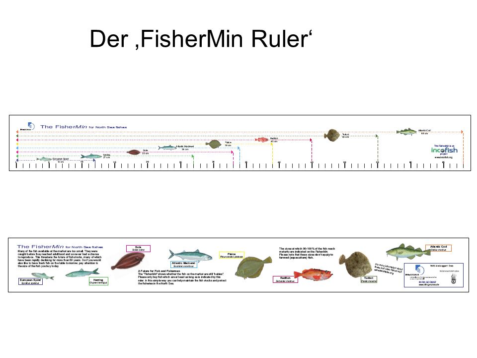 Der 'FisherMin Ruler'