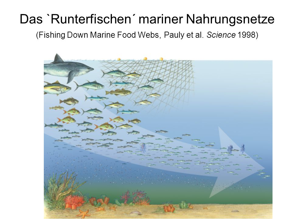 Das `Runterfischen´ mariner Nahrungsnetze (Fishing Down Marine Food Webs, Pauly et al. Science 1998)
