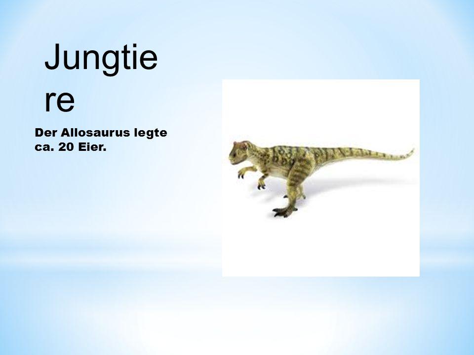 Jungtiere Der Allosaurus legte ca. 20 Eier.