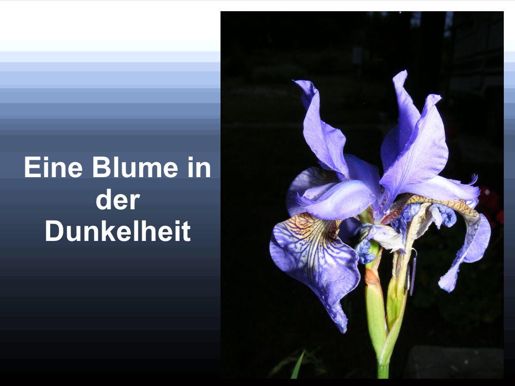 Eine Blume in der Dunkelheit
