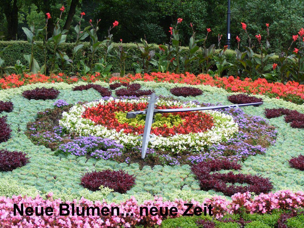 Neue Blumen... neue Zeit 7