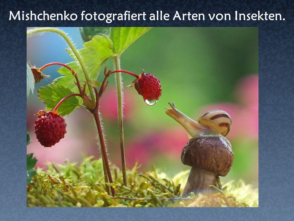 Mishchenko fotografiert alle Arten von Insekten.