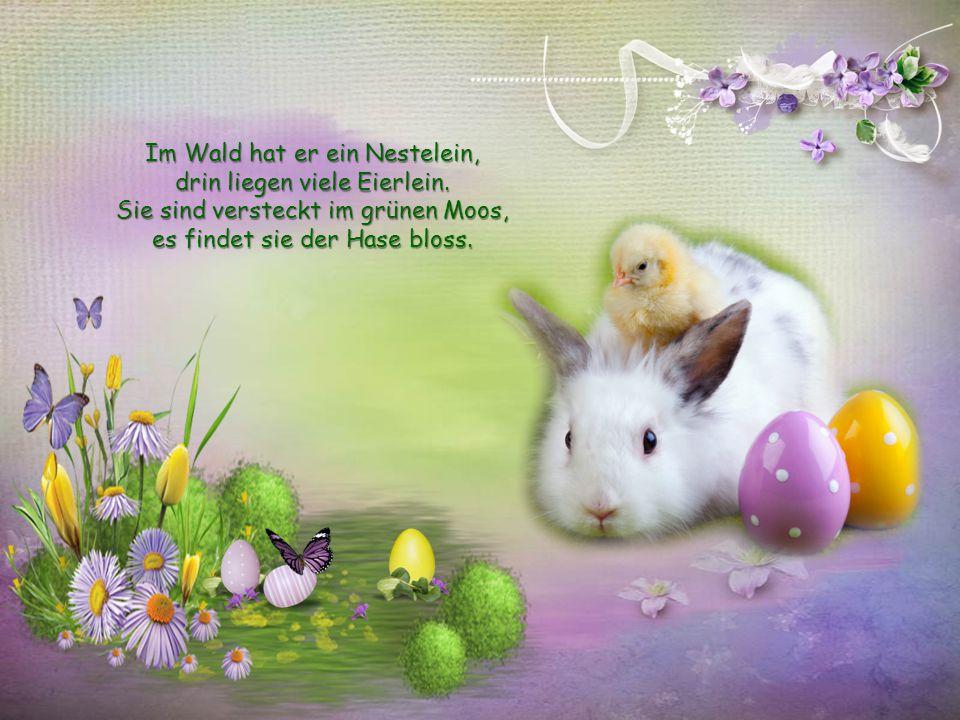 Im Wald hat er ein Nestelein, drin liegen viele Eierlein.