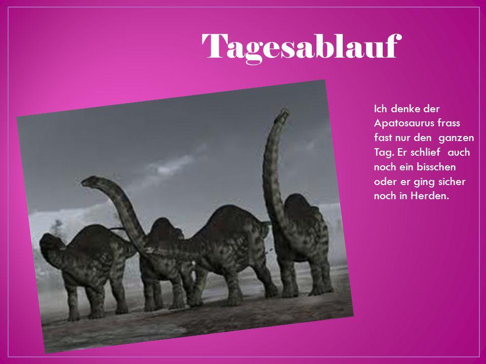 Tagesablauf Ich denke der Apatosaurus frass fast nur den ganzen Tag.