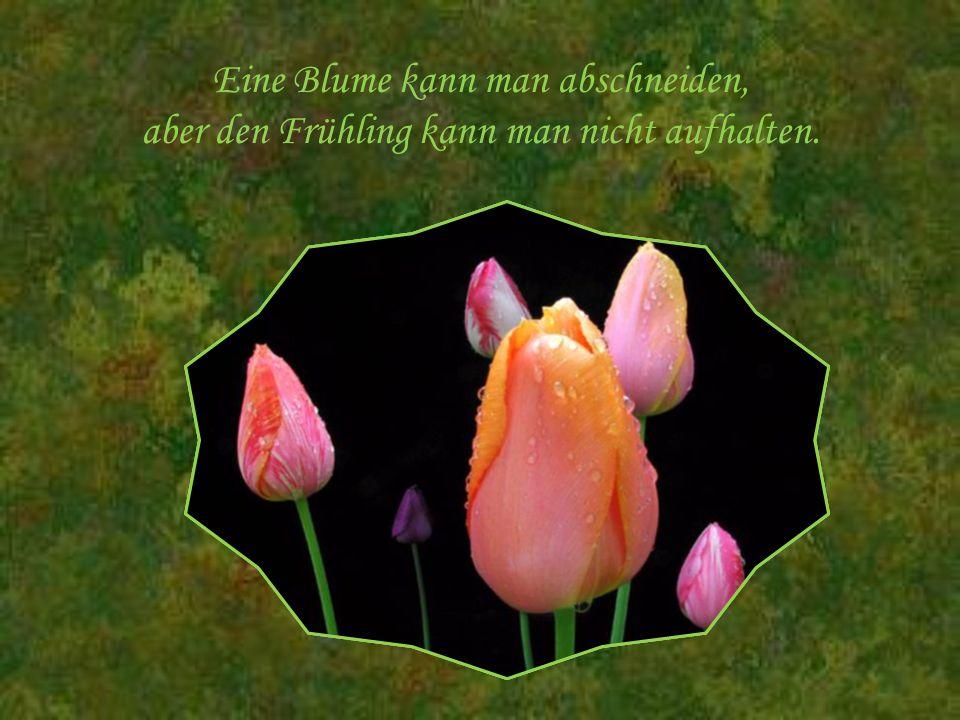 Eine Blume kann man abschneiden, aber den Frühling kann man nicht aufhalten.
