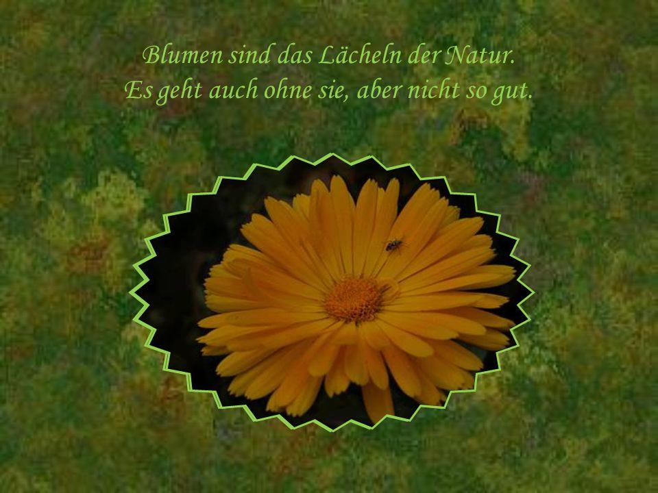 Blumen sind das Lächeln der Natur