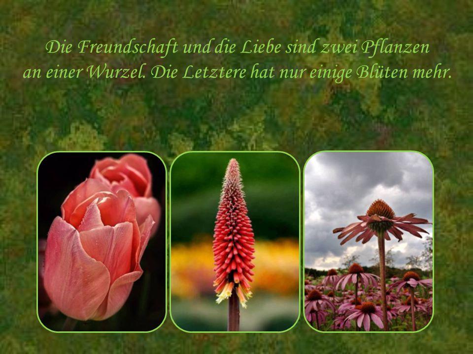 Die Freundschaft und die Liebe sind zwei Pflanzen an einer Wurzel