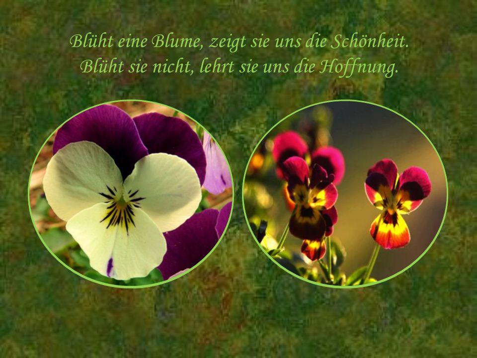 Blüht eine Blume, zeigt sie uns die Schönheit