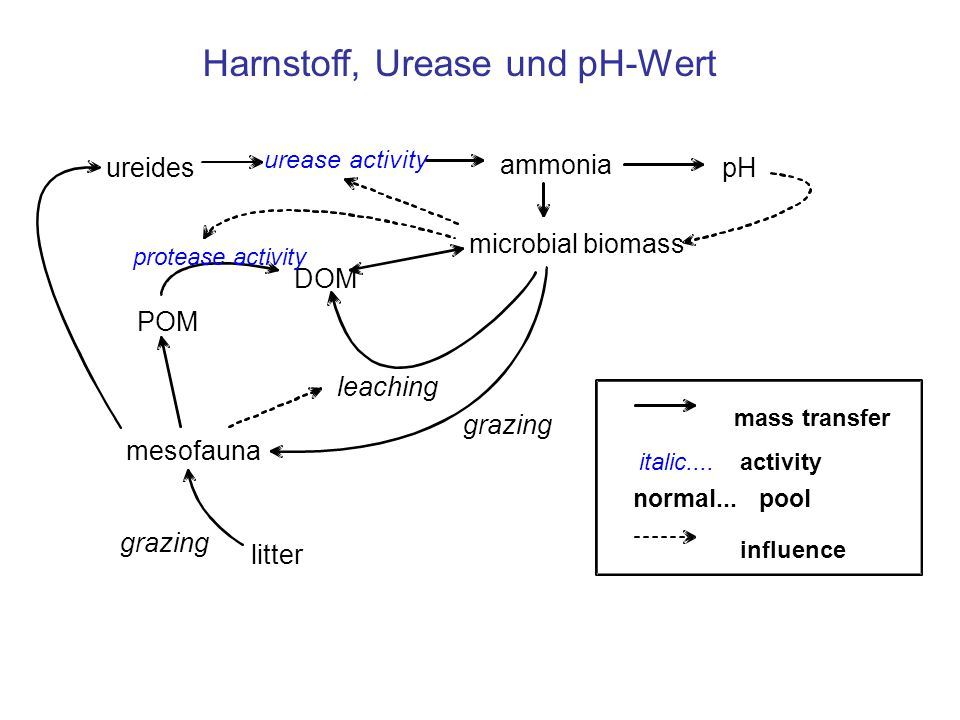 Harnstoff, Urease und pH-Wert
