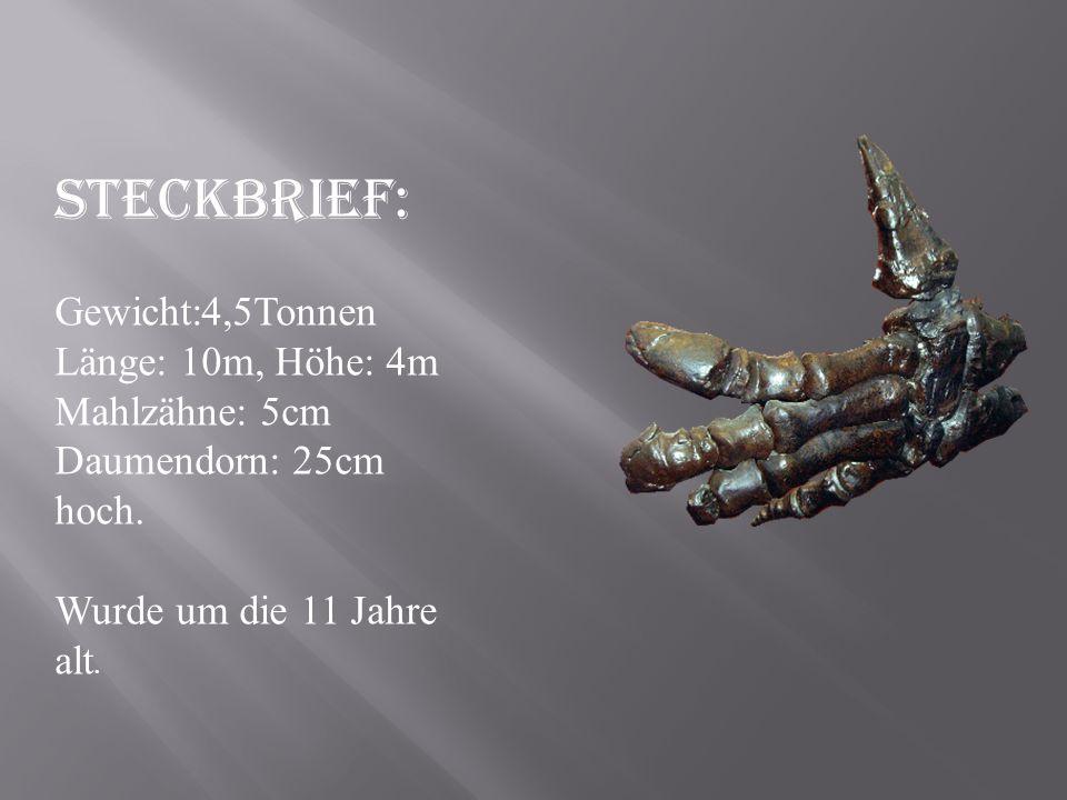 Steckbrief: Gewicht:4,5Tonnen Länge: 10m, Höhe: 4m Mahlzähne: 5cm