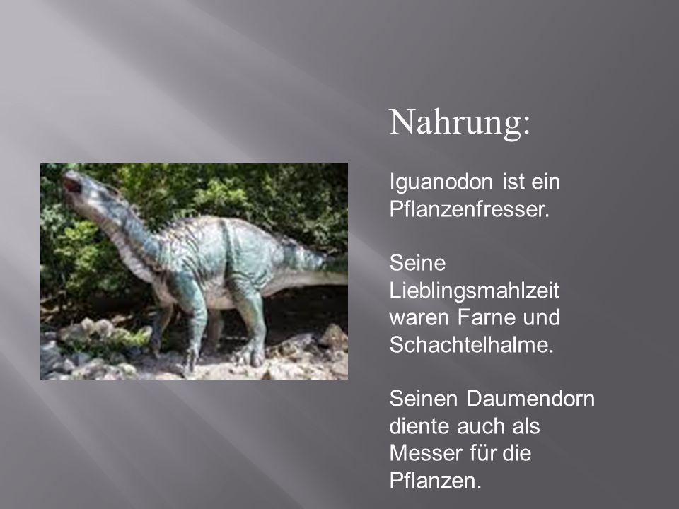 Nahrung: Iguanodon ist ein Pflanzenfresser.