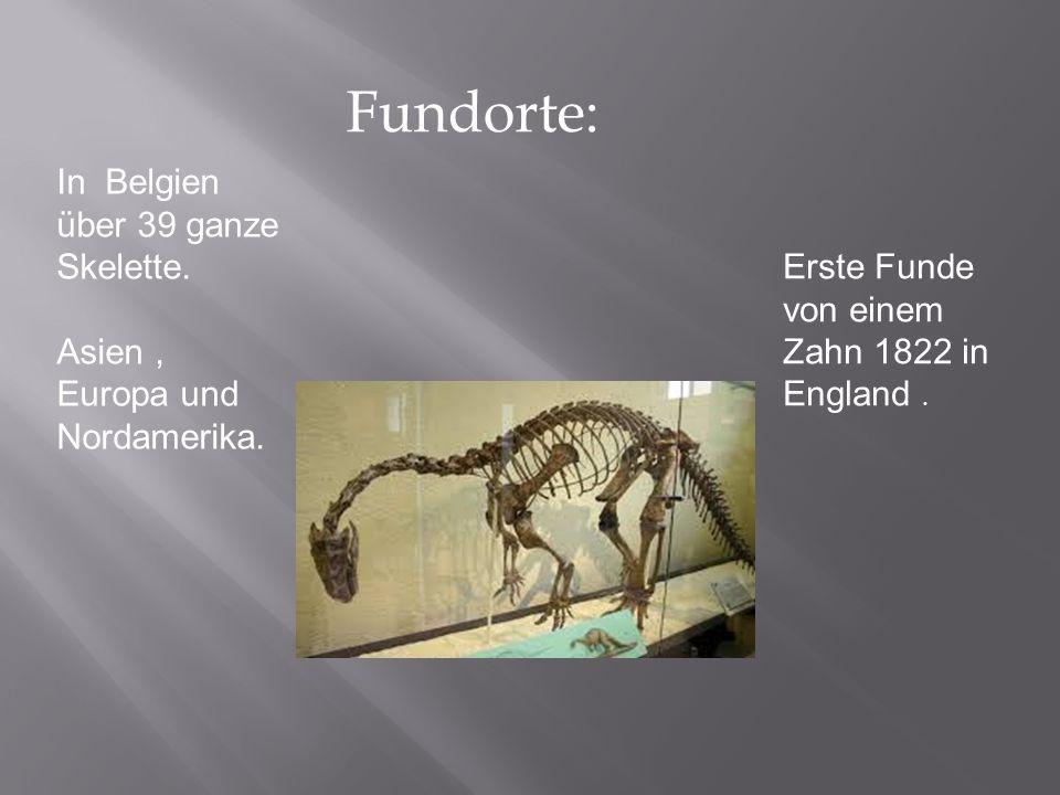 Fundorte: In Belgien über 39 ganze Skelette. Asien , Europa und