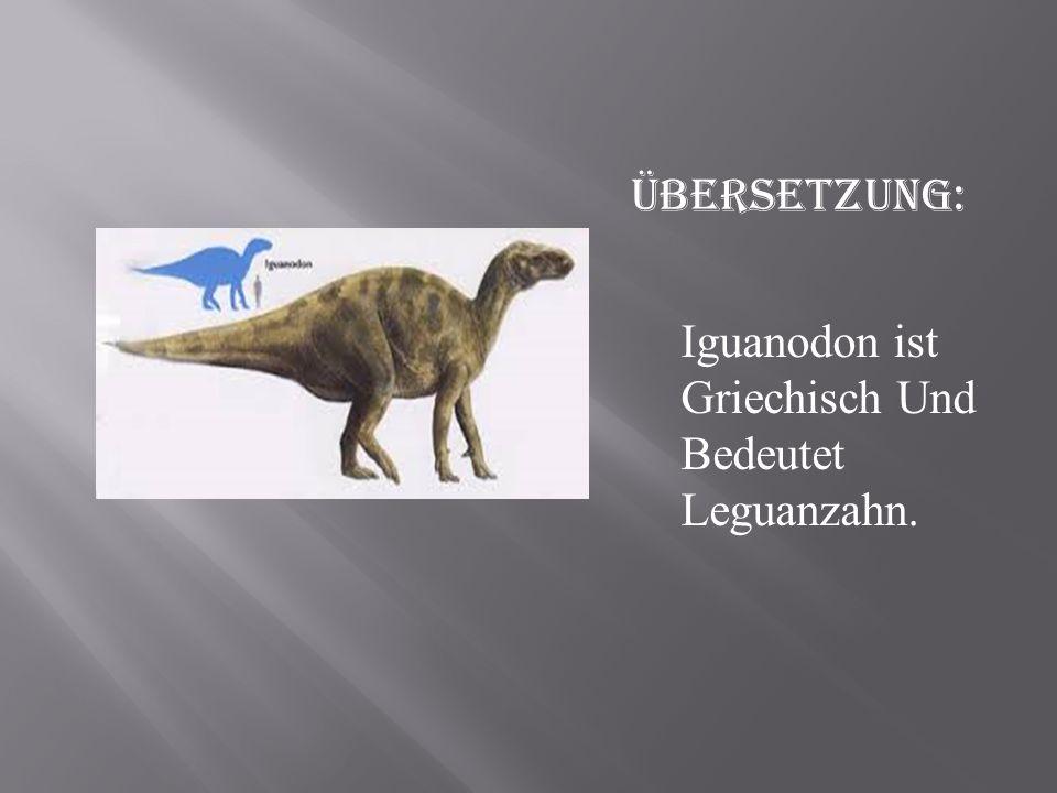 Übersetzung: Iguanodon ist Griechisch Und Bedeutet Leguanzahn.