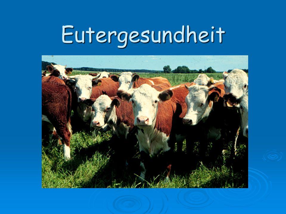Eutergesundheit Lenz. 2005