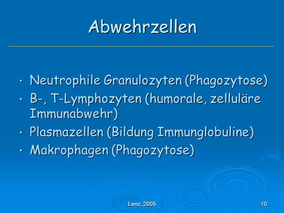 Abwehrzellen Neutrophile Granulozyten (Phagozytose)