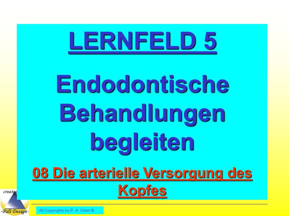 LERNFELD 5 Endodontische Behandlungen begleiten
