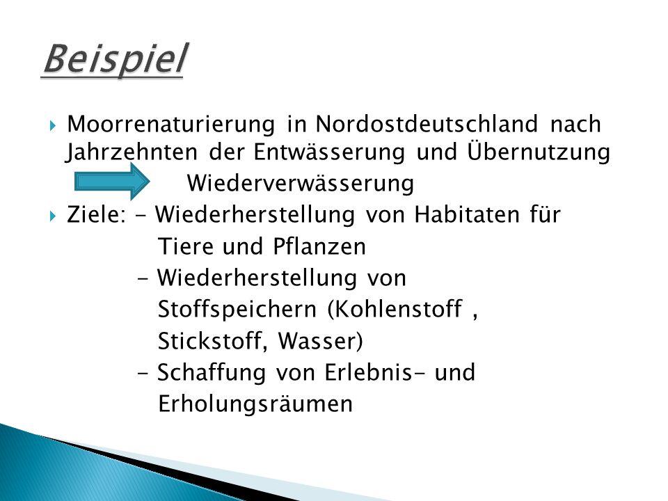 Beispiel Moorrenaturierung in Nordostdeutschland nach Jahrzehnten der Entwässerung und Übernutzung.