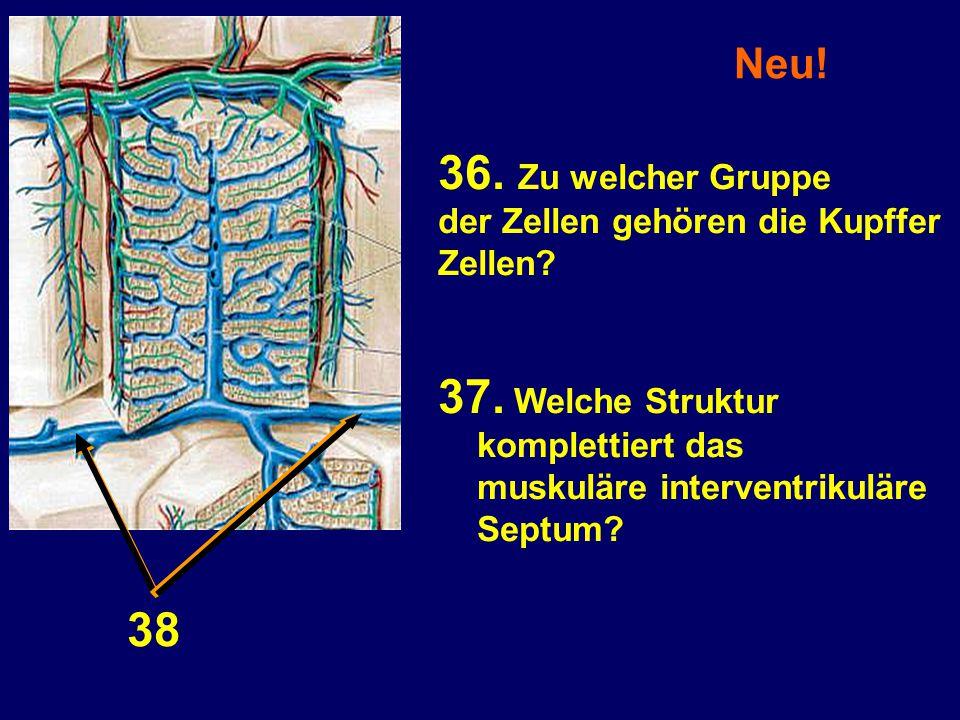 36. Zu welcher Gruppe 37. Welche Struktur 38 Neu!