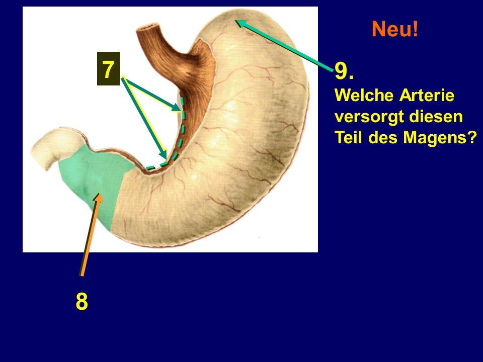 Neu! 7 9. Welche Arterie versorgt diesen Teil des Magens 8