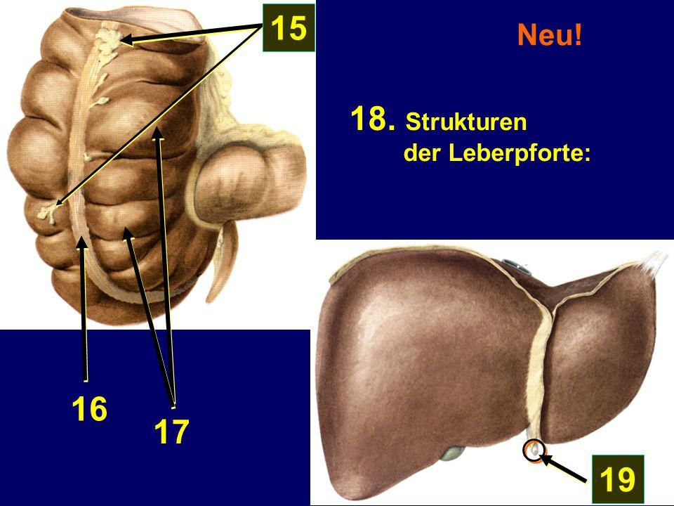 15 Neu! 18. Strukturen der Leberpforte: 16 17 19