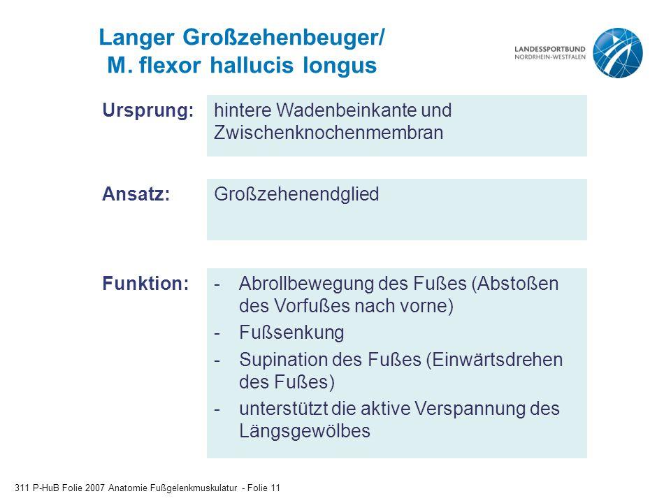 Langer Großzehenbeuger/ M. flexor hallucis longus