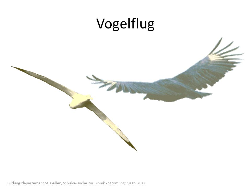 Vogelflug Bildungsdepartement St. Gallen, Schulversuche zur Bionik - Strömung; 14.05.2011
