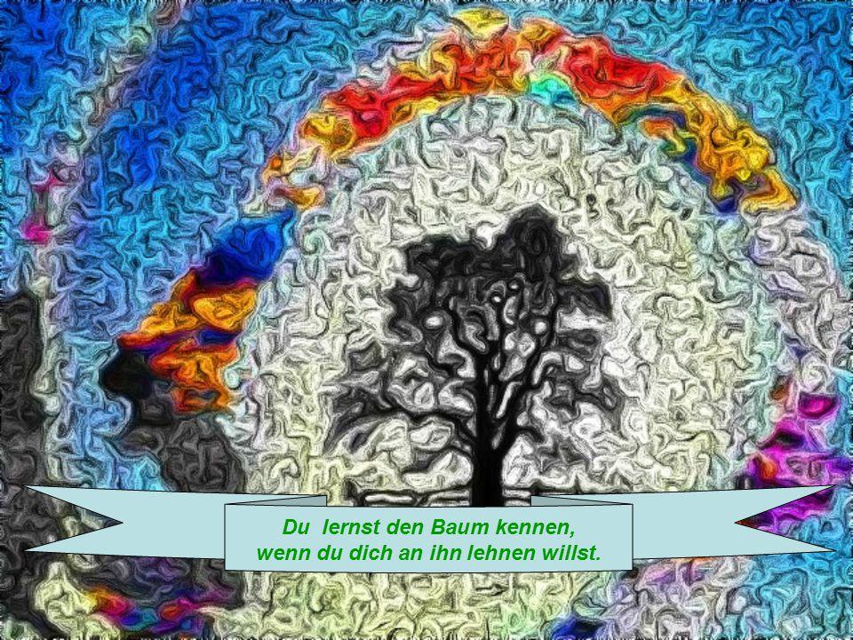 Du lernst den Baum kennen, wenn du dich an ihn lehnen willst.