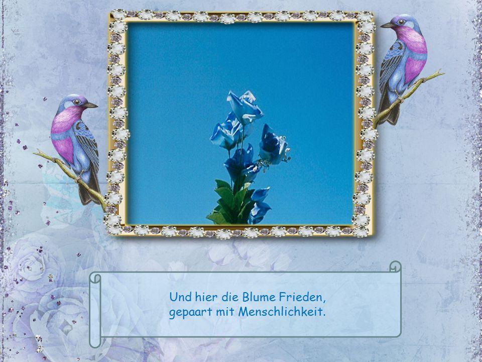 Und hier die Blume Frieden, gepaart mit Menschlichkeit.