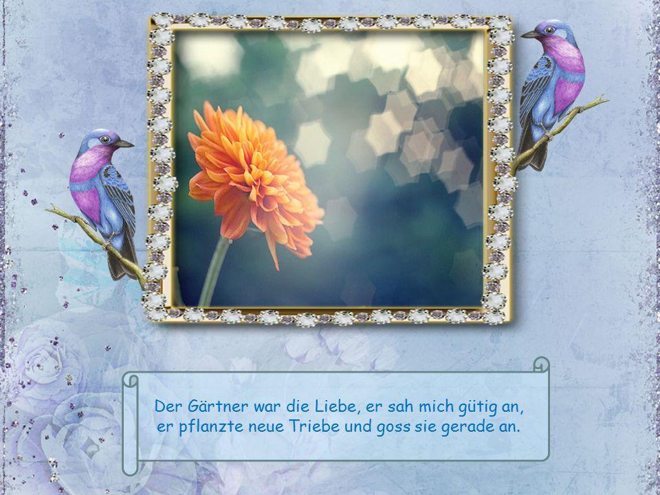 Der Gärtner war die Liebe, er sah mich gütig an, er pflanzte neue Triebe und goss sie gerade an.