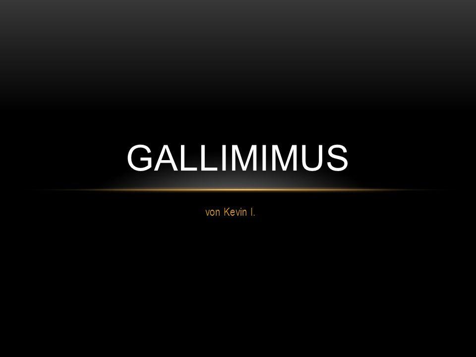 GALLIMIMUS von Kevin I.
