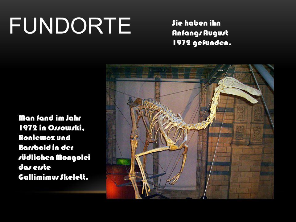 FUNDORTE Sie haben ihn Anfangs August 1972 gefunden.