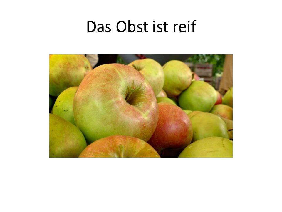 Das Obst ist reif