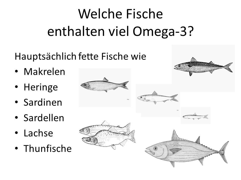 Welche Fische enthalten viel Omega-3