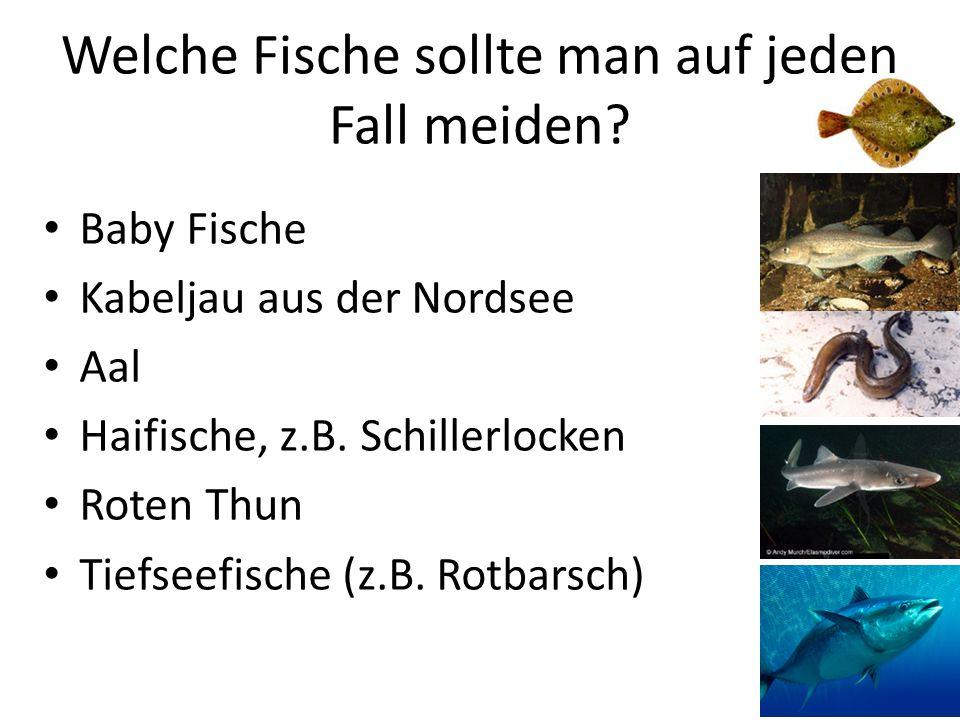 Welche Fische sollte man auf jeden Fall meiden