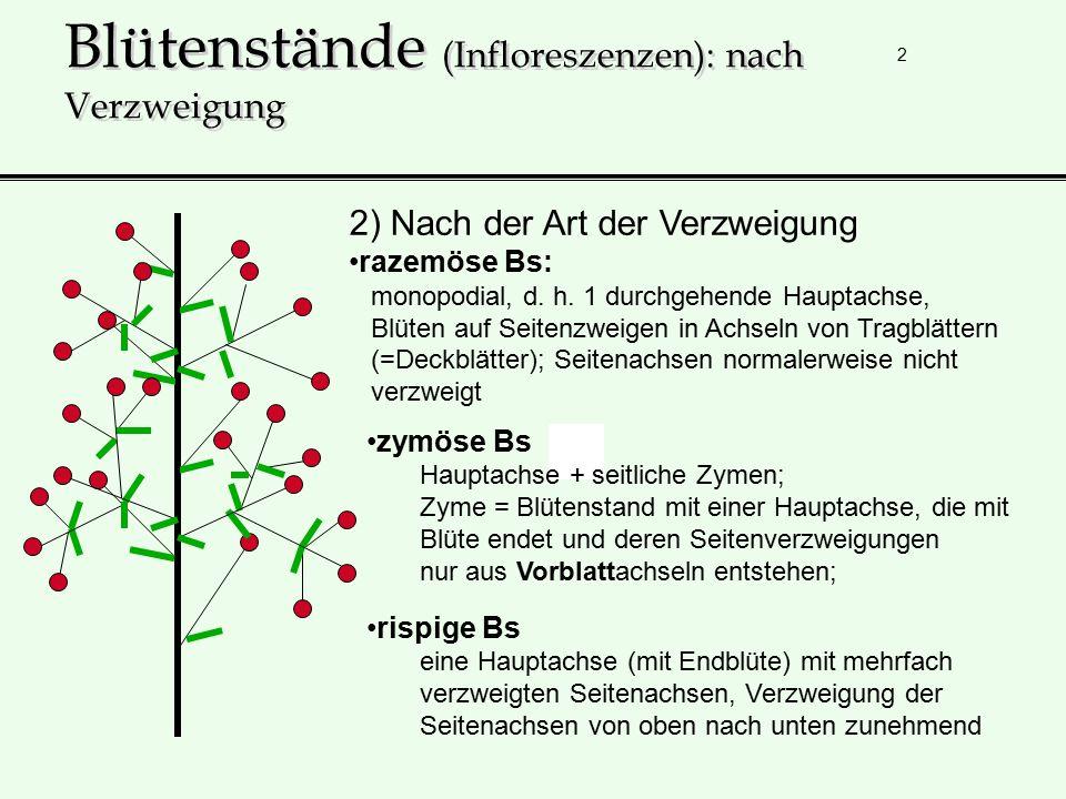 Blütenstände (Infloreszenzen): nach Verzweigung