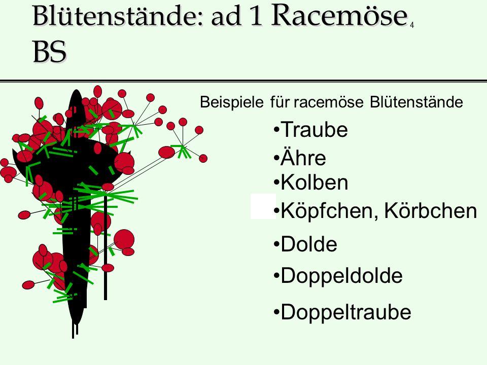 Blütenstände: ad 1 Racemöse BS
